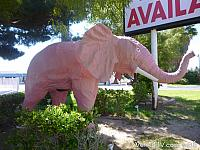 pinkelephant08