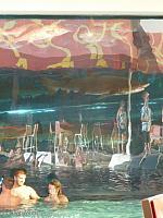 Sharks swim next to the swimming pool