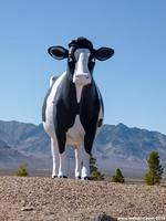 A giant cow in the Nevada desert!